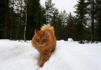 L'anti-blues du dimanche soir : Jesper, le chat norvégien qui vit comme un humain