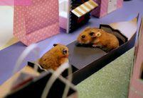 Prêt-à-liker : les hamsters aussi fêtent la Saint-Valentin